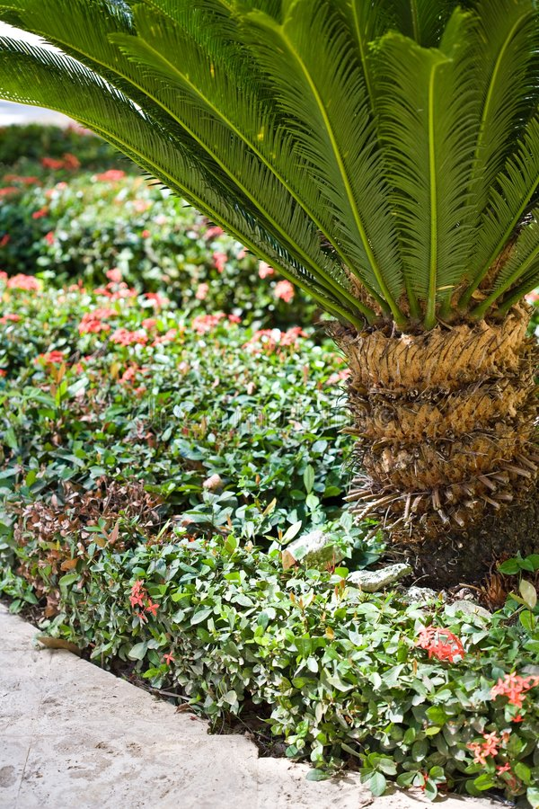 Download A Path In A Tropical Resort Stock Photo - Image: 4851528