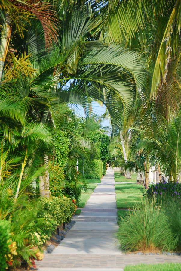 Path with tropical trees stock photos