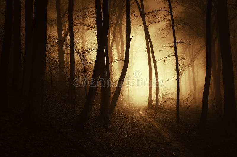 Path trough a dark haunted forest with fog at sunset. Path trough a dark haunted forest with thick fog at sunset royalty free stock images