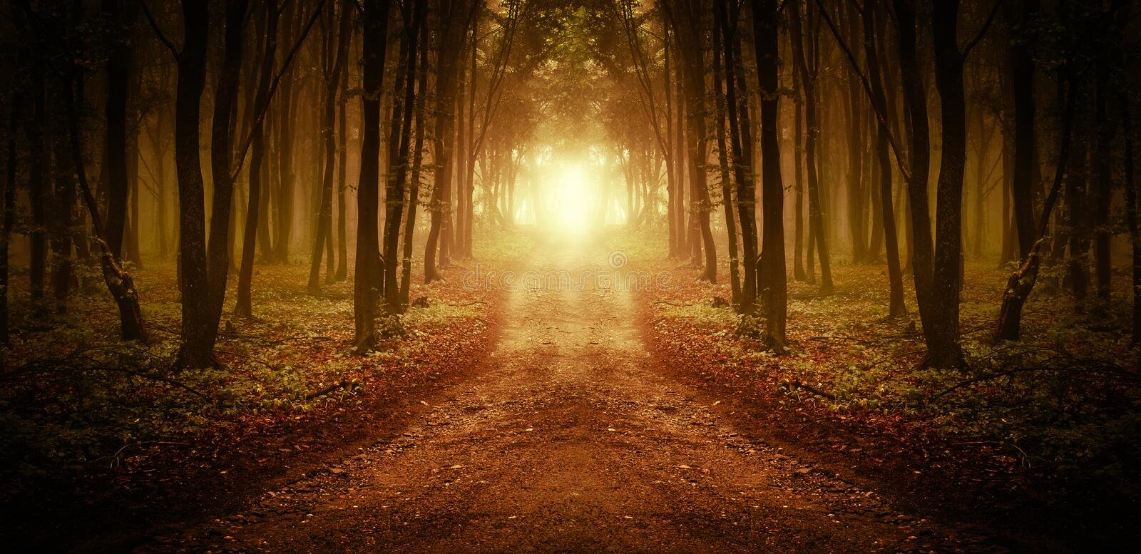 Path trough a magical forest at sunrise stock photography