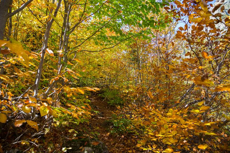 Path up through the woods on a mountain slope. stock images