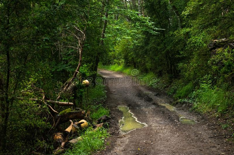 Path, Vegetation, Nature, Forest royalty free stock photography