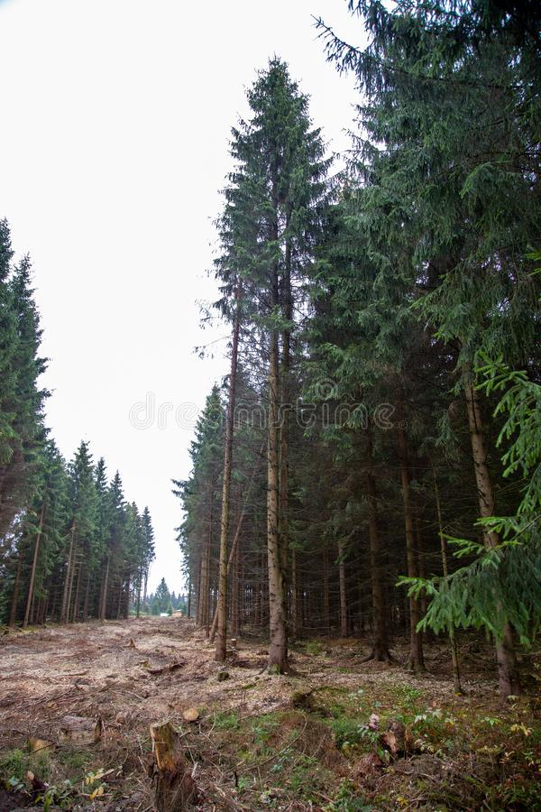 A path was cut through the forest to plant new woods. Its a rainy day royalty free stock photography