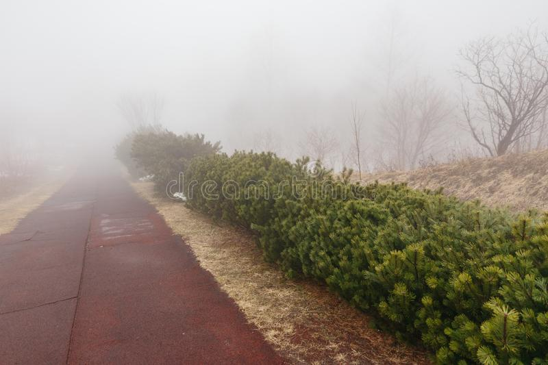 Path way with fern shrub along side that disappear in the fog at Mount Usu in winter in Hokkaido, Japan.  stock images
