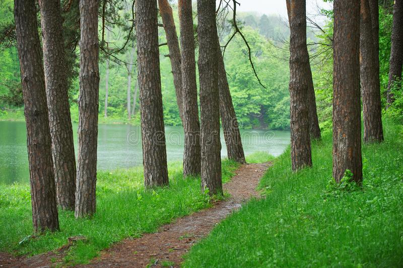 Pathway in green forest near the lake, nature scenic stock photos