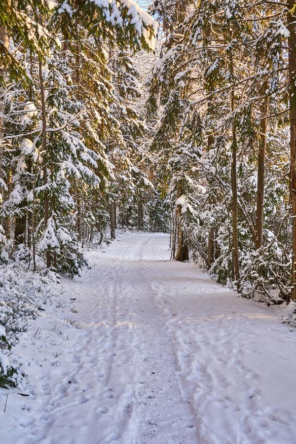 Path in white snowy forest royalty free stock photography