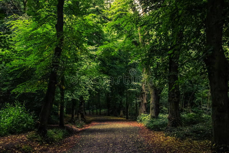 Path in the wild forest royalty free stock image