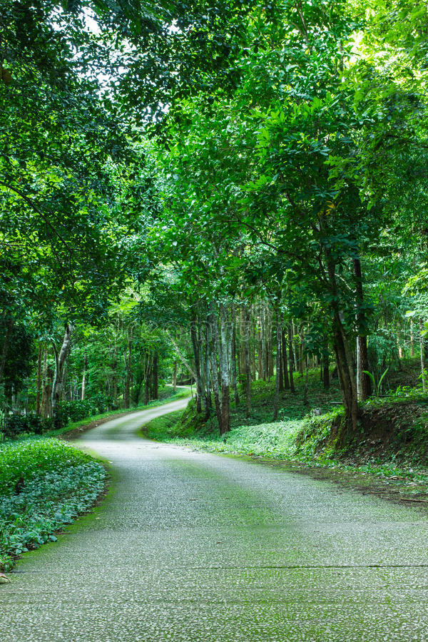 Path through wild forest with mossy and green folliage royalty free stock image