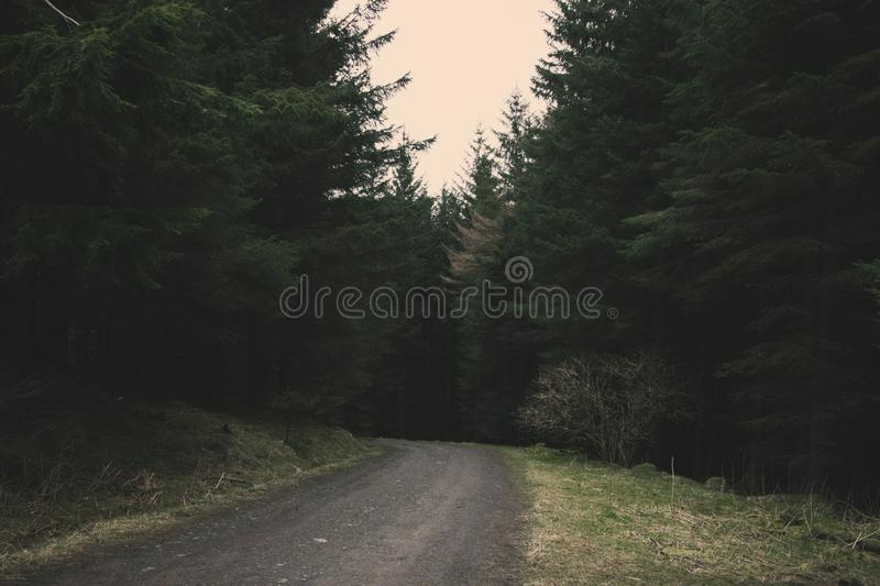 Round the bend. A path winding through a forest stock photo