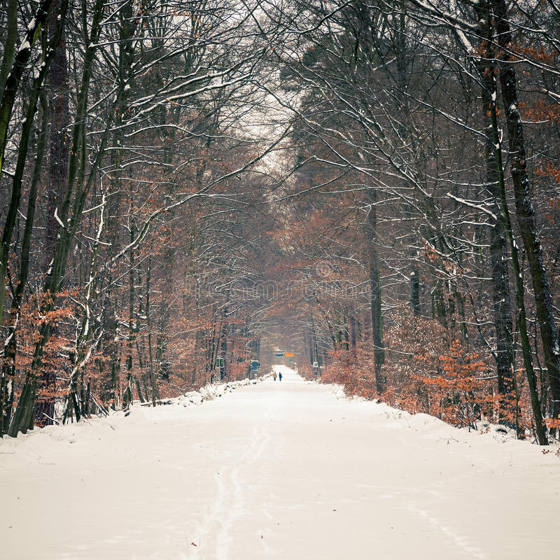 Download Path in winter forest stock photo. Image of toned, park - 27920016