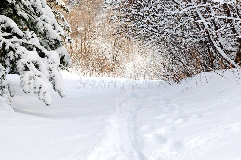 Path in winter forest stock photography