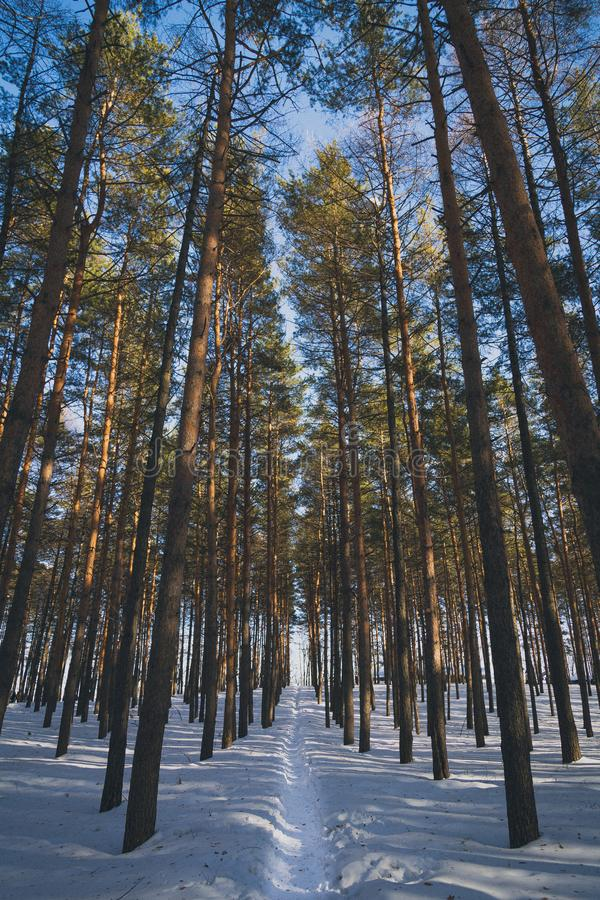 The path in winter forest stock images