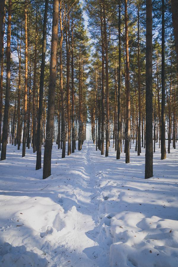 The path in winter forest stock image
