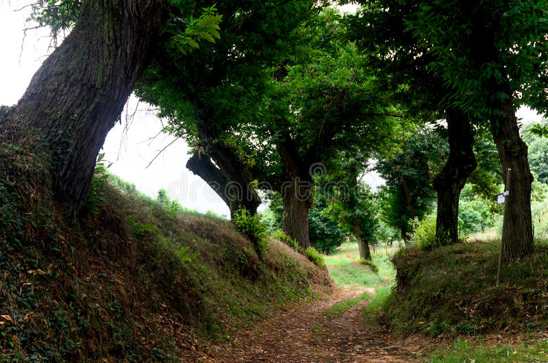 Path in the wood. Pathway in the woods of Roero, Italy royalty free stock photography