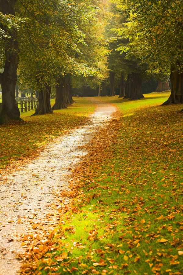 Download Path through woodland stock photo. Image of park, trees - 3381792