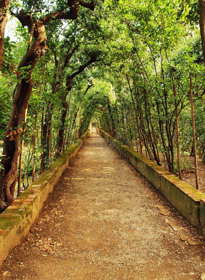 Path through woodland and trees stock photos