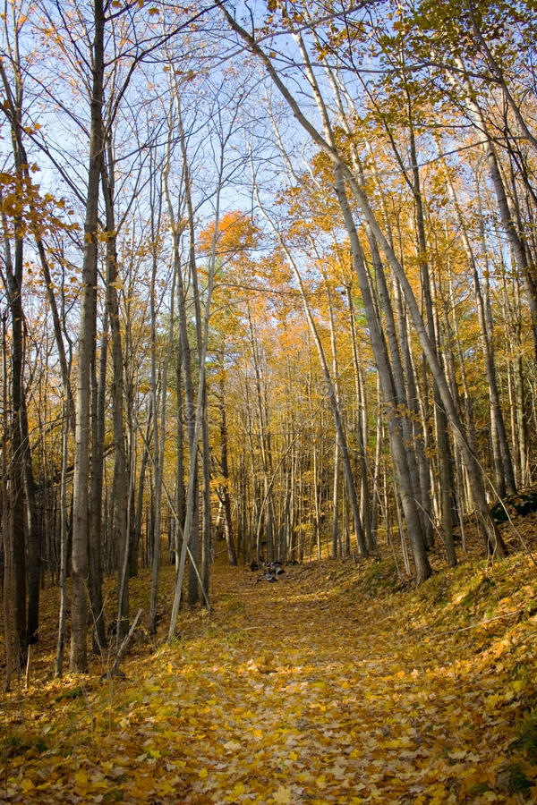 Path in the woods. royalty free stock photo