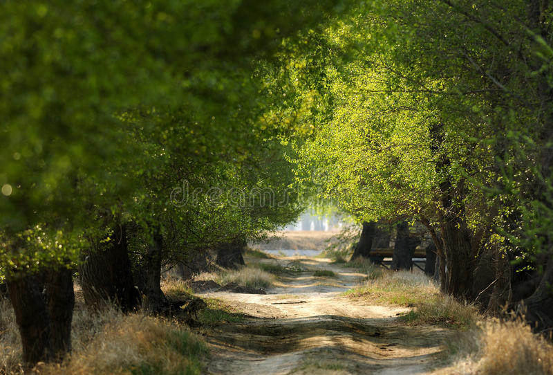 Download The path of the woods stock photo. Image of tranquility - 24767056