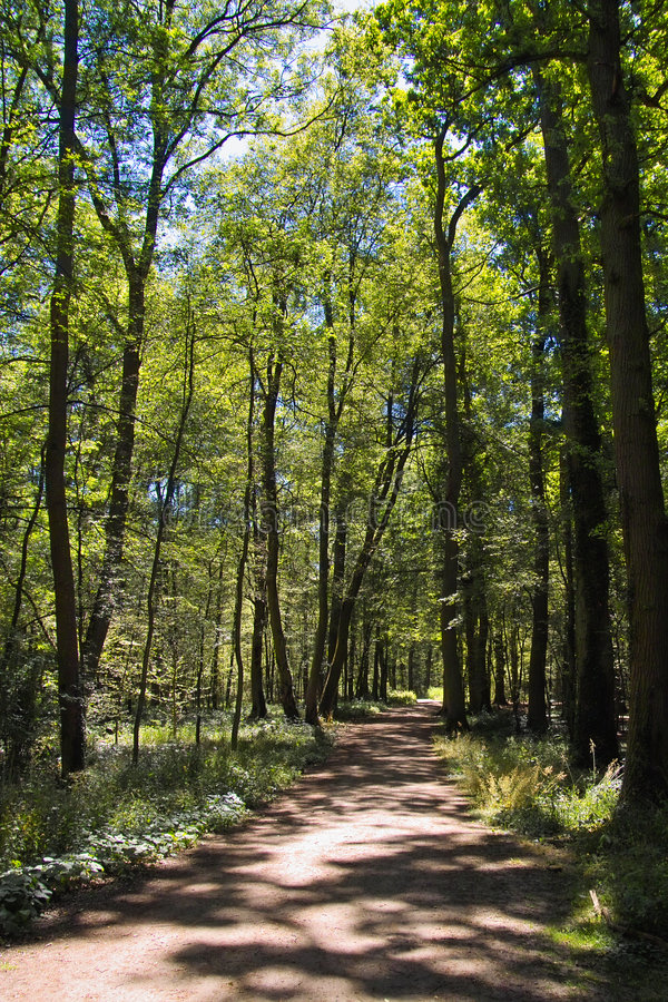 Download Path in woods stock image. Image of evening, greenery, nature - 273361