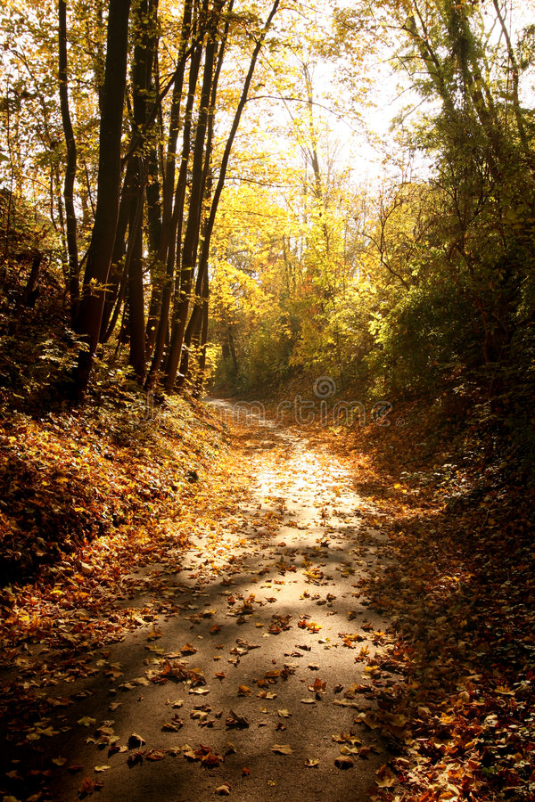 Path through woods in fall stock image