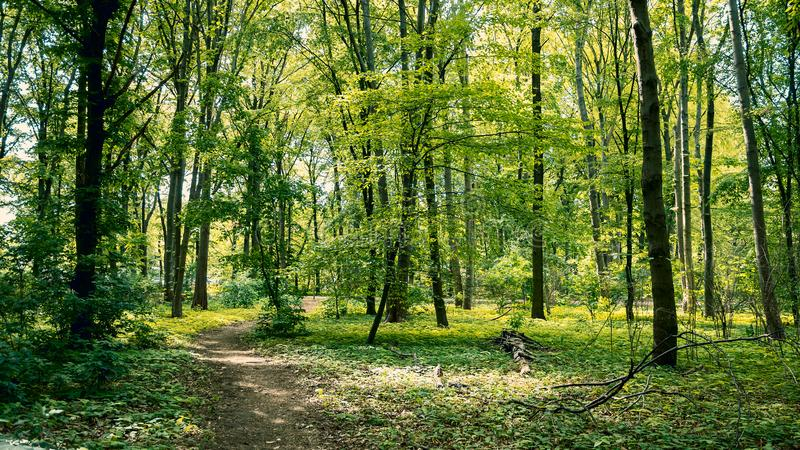 Path Through The Woods: Forest in Tiergarten Park In Berlin, Germany In Spring. Landscape Background stock photos