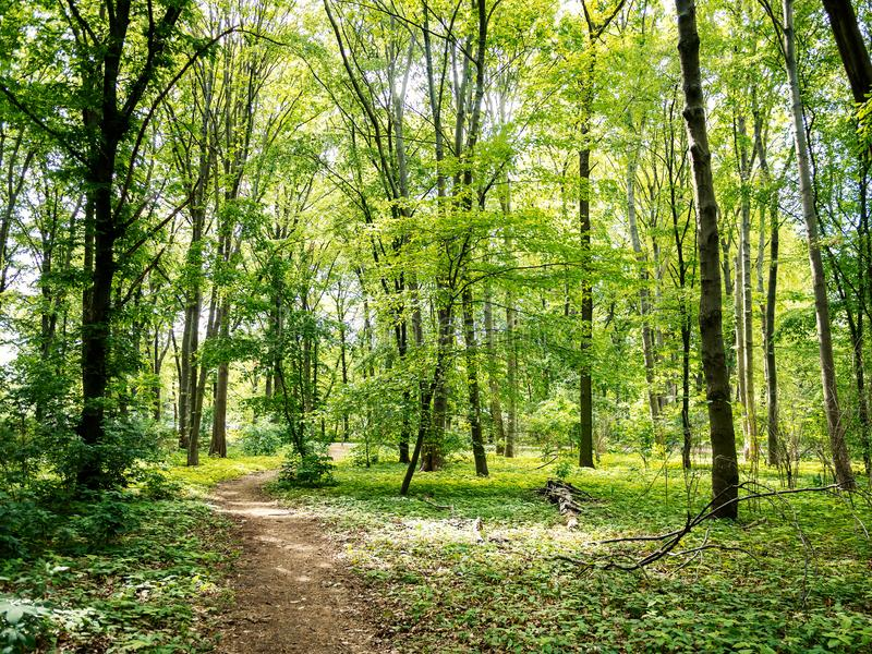 Path Through The Woods: Forest in Tiergarten Park In Berlin, Germany In Spring. Landscape Background stock image