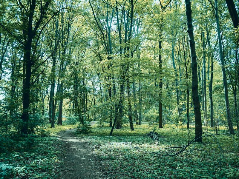 Path Through The Woods: Forest in Tiergarten Park In Berlin, Germany In Spring. Landscape Background stock photography