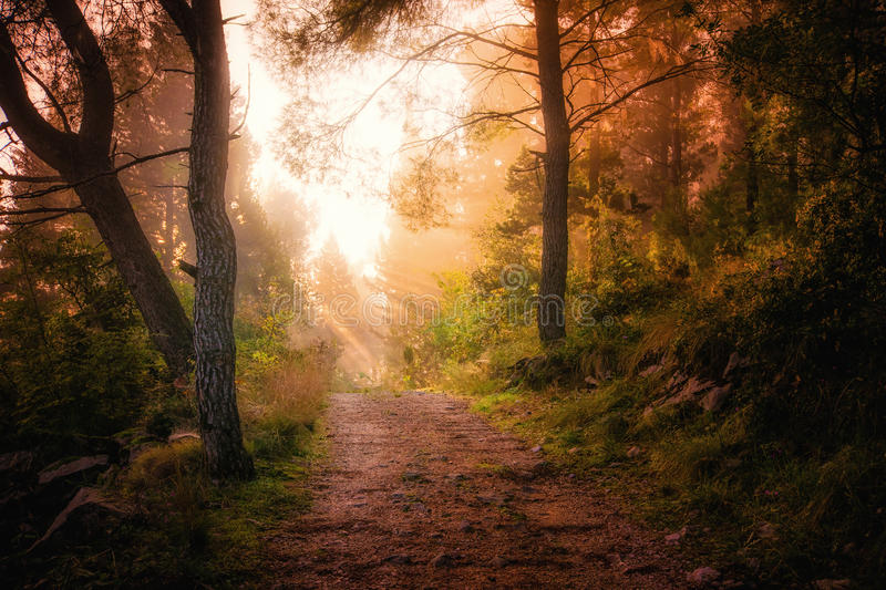 Path through the woods and light rays as they break through fog royalty free stock images