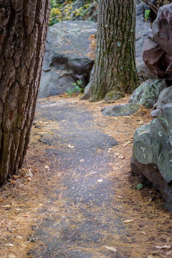 Path in the woods. Narrow path through pine trees and quartzite rocks in Wisconsin royalty free stock photo