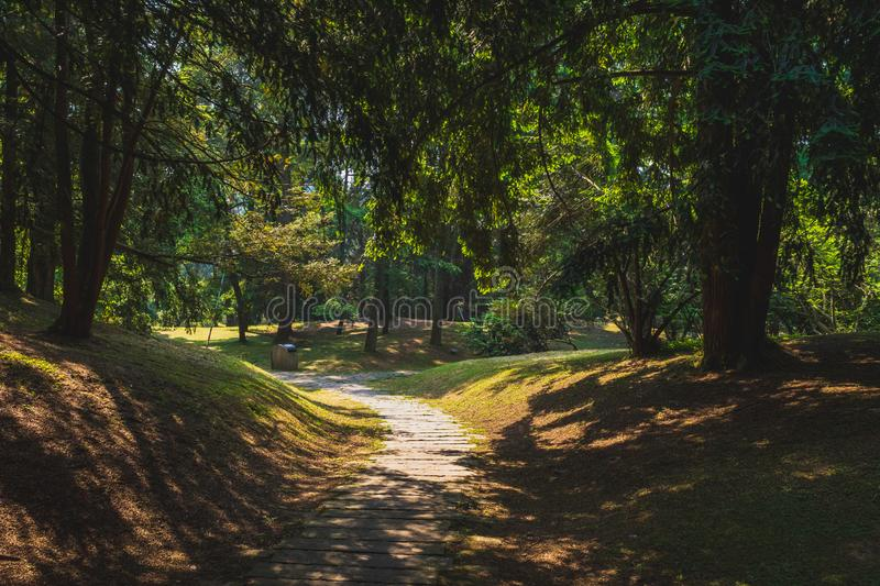 Path among woods in park near West Lake, Hangzhou, China stock photos