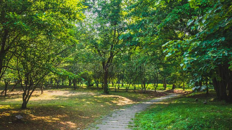 Path among woods in park near West Lake, Hangzhou, China stock image