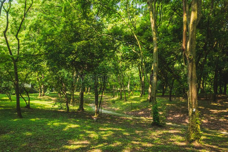 Path among woods in park near West Lake, Hangzhou, China royalty free stock photos