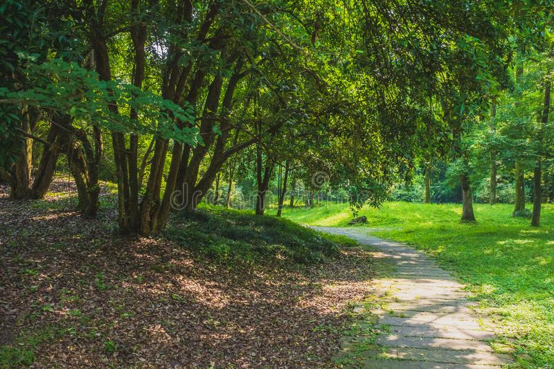 Path among woods in park near West Lake, Hangzhou, China royalty free stock photo