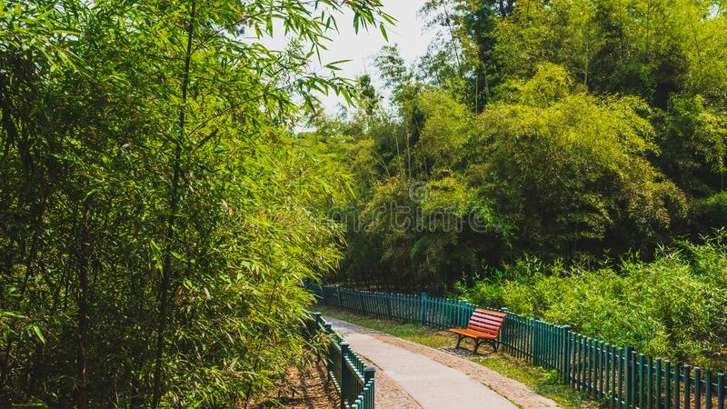Path among woods in park near West Lake, Hangzhou, China stock photo