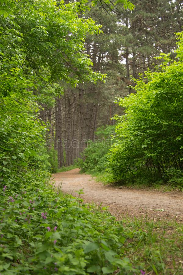 path in the woods stock photography