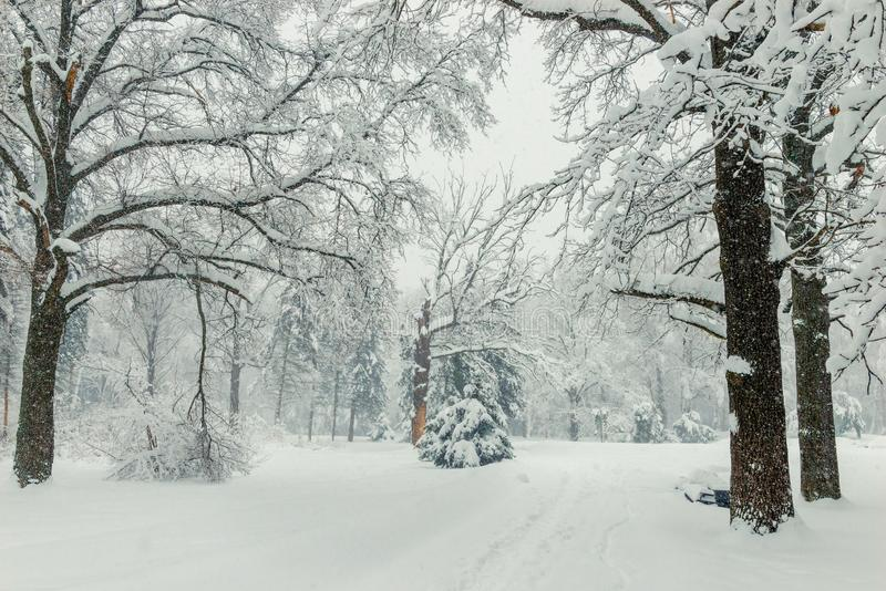 Path in the woods in winter, natural winter landscape background. A lot of snow stock images