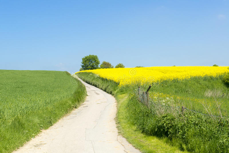 Path between yellow field and blooming meadows stock photo