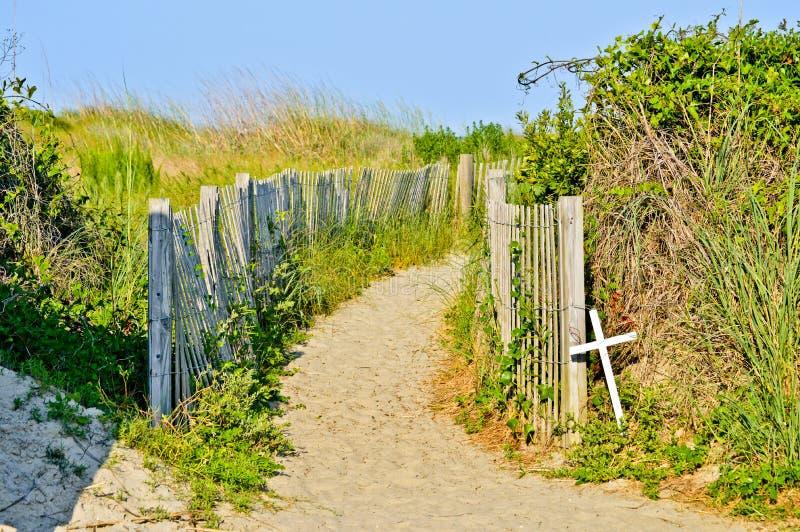 Paths along the beach. Es of NC stock photo