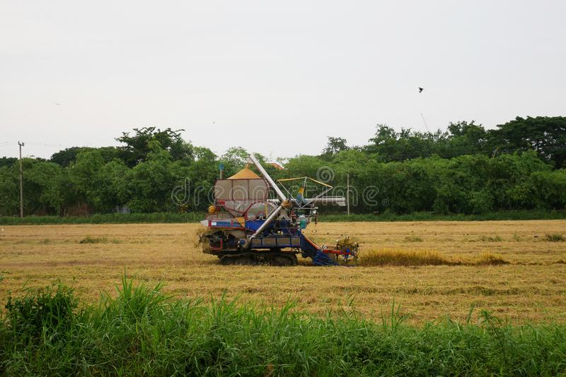 Pathum Thani, Таиланд 8-ое июля 2018: Тайские жатки привода фермера дают рис на поле в Таиланде стоковая фотография