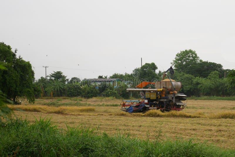 Pathum Thani, Tailandia 8 de julio de 2018: Las máquinas segadores tailandesas de la impulsión del granjero dan el arroz en campo imagen de archivo