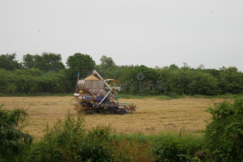 Pathum Thani, Tailandia 8 de julio de 2018: Las máquinas segadores tailandesas de la impulsión del granjero dan el arroz en campo foto de archivo