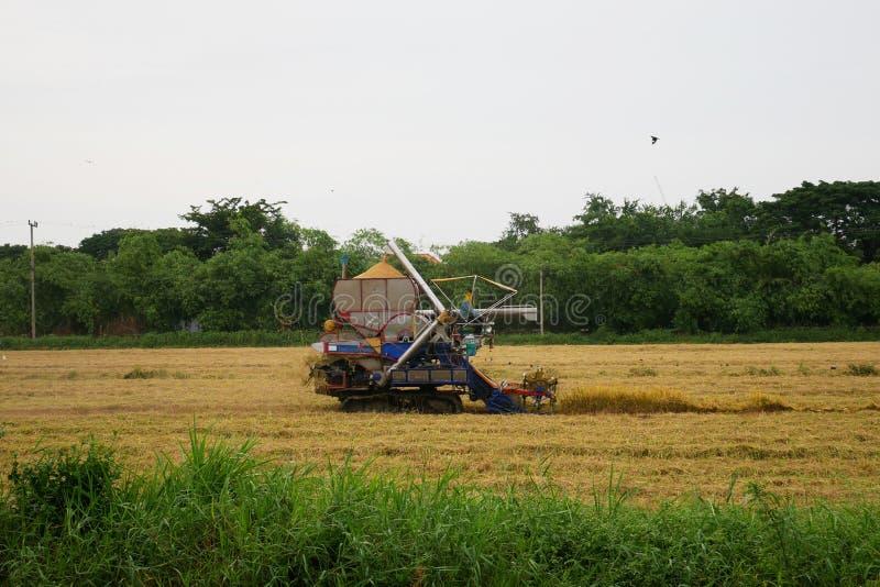 Pathum Thani, Tailandia 8 de julio de 2018: Las máquinas segadores tailandesas de la impulsión del granjero dan el arroz en campo fotografía de archivo