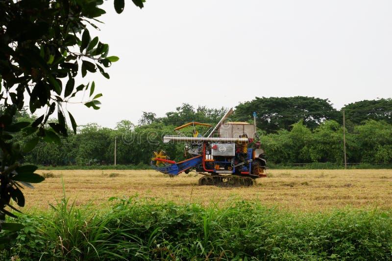 Pathum Thani, Tailandia 8 de julio de 2018: Las máquinas segadores tailandesas de la impulsión del granjero dan el arroz en campo imagenes de archivo