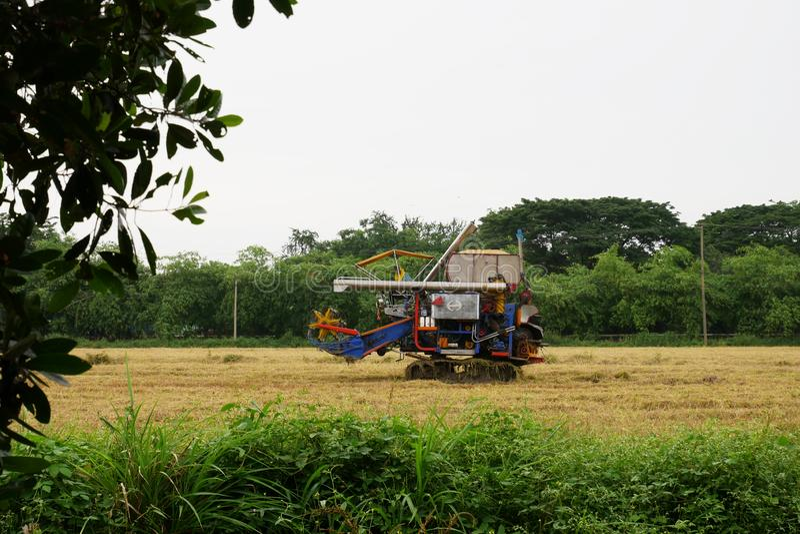 Pathum Thani, 8 Thailand-juli, 2018: De Thaise maaimachines van de landbouwersaandrijving geven rijst op gebied in Thailand stock afbeeldingen