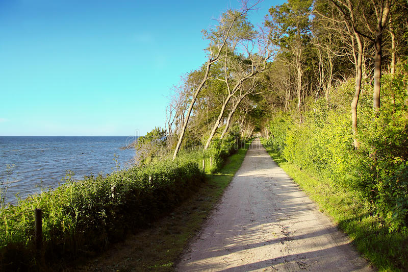 Download Pathway stock photo. Image of path, bush, sand, evening - 15290508