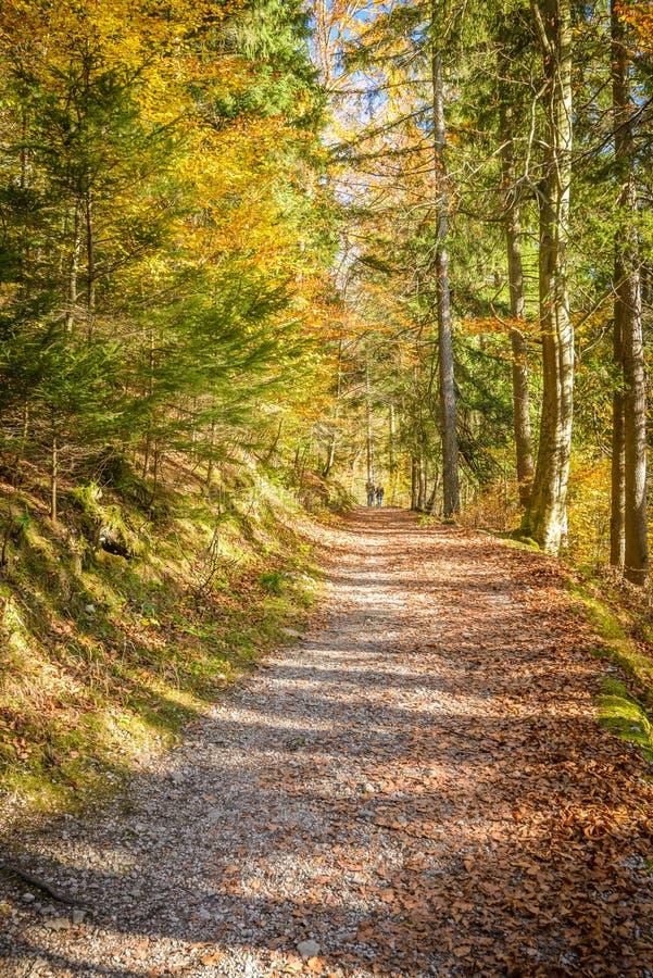 pathway zdjęcia royalty free