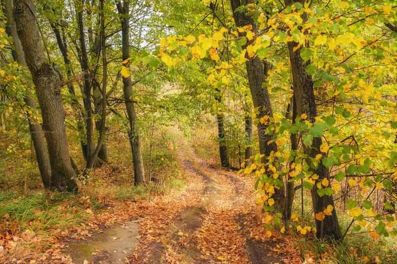 Pathway through the autumn forest royalty free stock photos