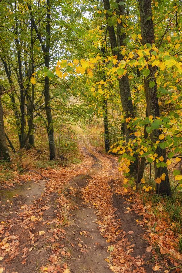 Pathway through the autumn forest royalty free stock photography