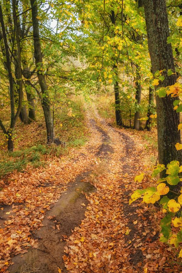 Pathway through the autumn forest stock photography