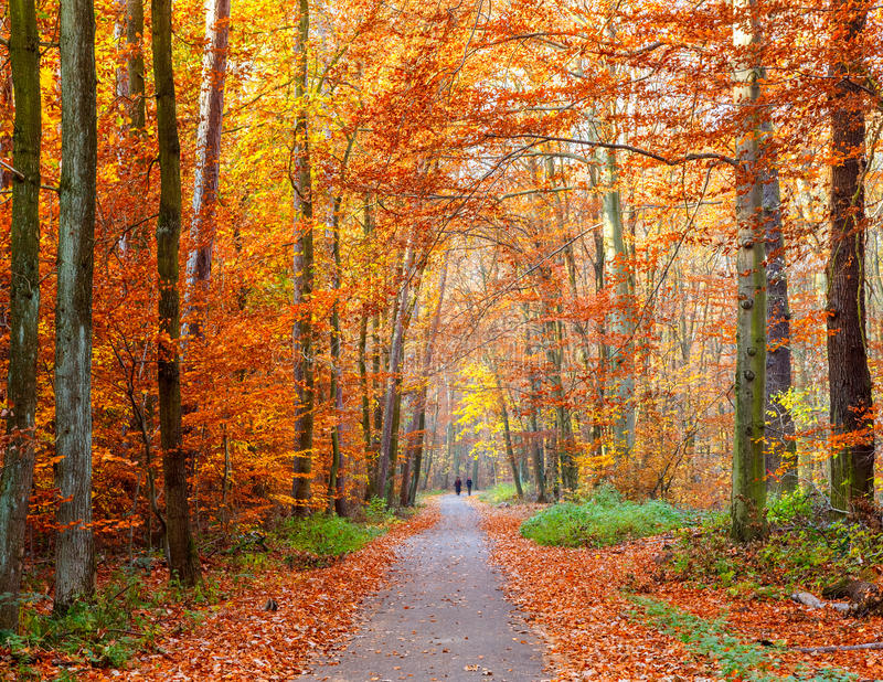 Pathway in the autumn forest stock images